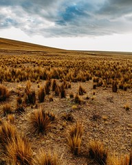 Out of the desert and into Alpaca land. #theworldwalk #travel #peru