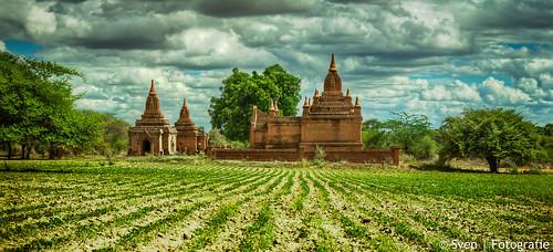 Bagan Fields