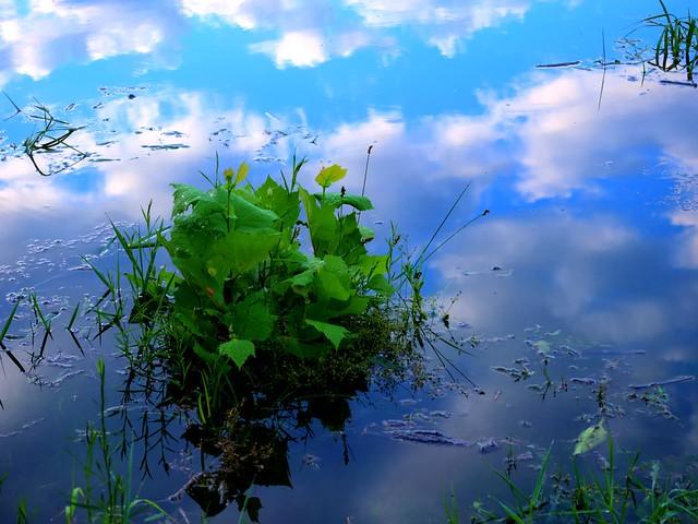 Clear Sky Reflection © Nicolas Liu