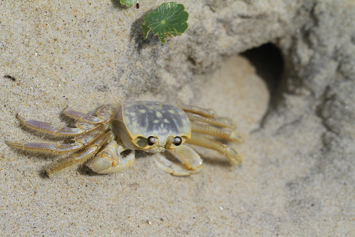 Crab by Barbara2112