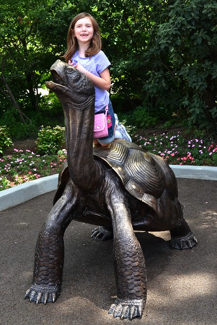 Tortise Statue