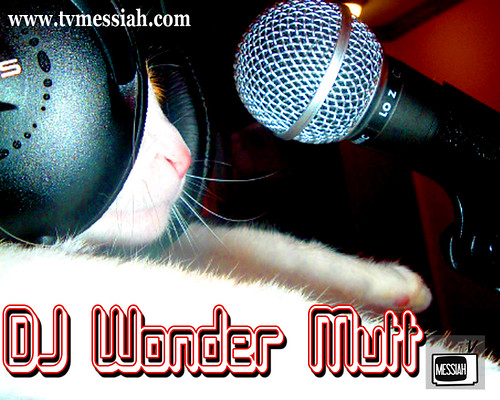 dj mix master wonder mutt on the mic