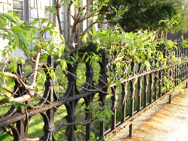 Old Gates and the Vines