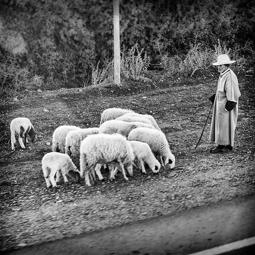 Shephard watching over his flock..