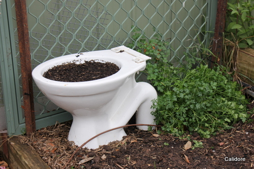I planted a Toilet in the Garden