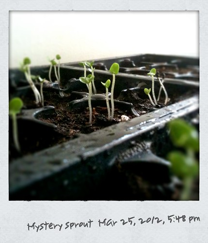 mystery sprouts
