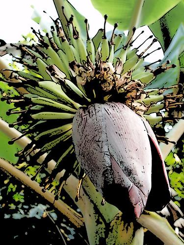 201202210330-banana-flower2-w