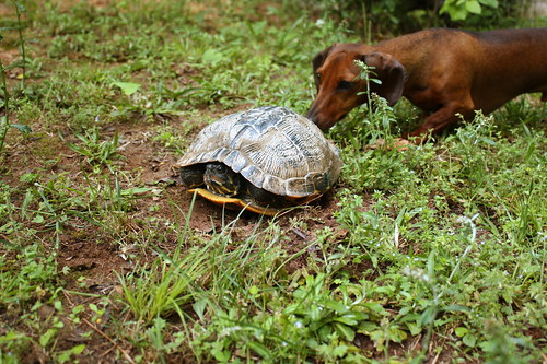 oliver and turtle