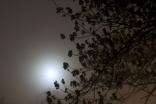 Foggy Moonlight by drobi_123
