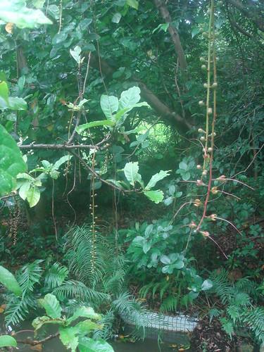 台中植物園30