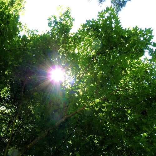 unter Bäumen II