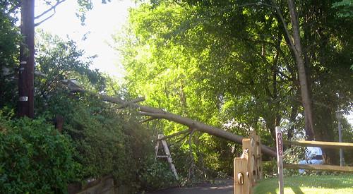 20120630 0838 - storm damage while yardsaleing - 6819 Valleybrook - IMG_4518