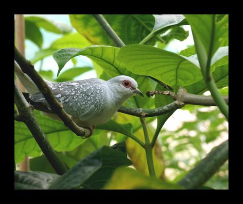 A Diamond Dove Bird
