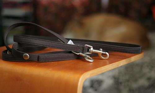 Extra dog leashes