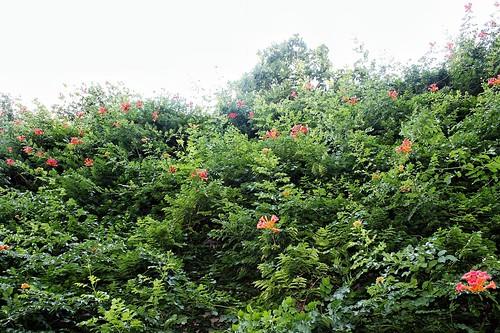 Tbilisi garden wall