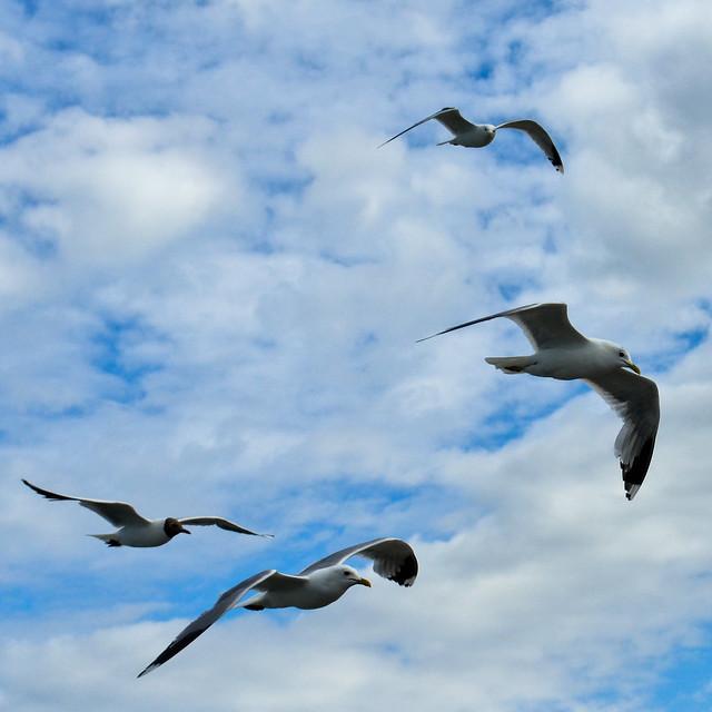 Seagulls...