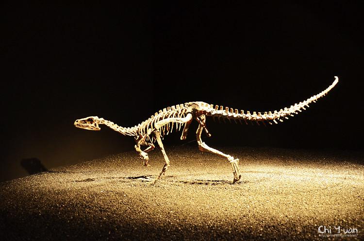 地球最古老的恐龍展09.jpg