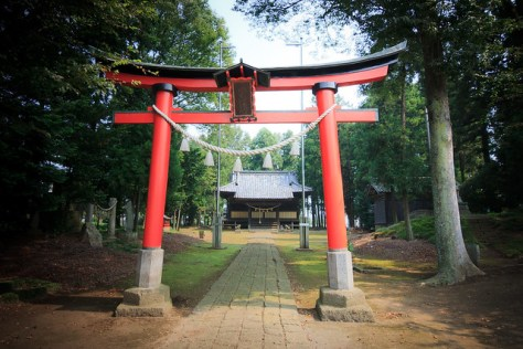 #19 The Giant Zelkova of Asada Shrine