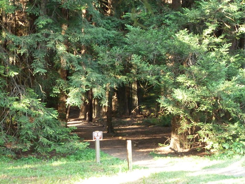 5-18-12 CA 32 - Avenue of the Giants