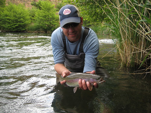 Wild Deschutes River Rainbow Trout