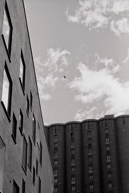 Fotovandring, analog #004