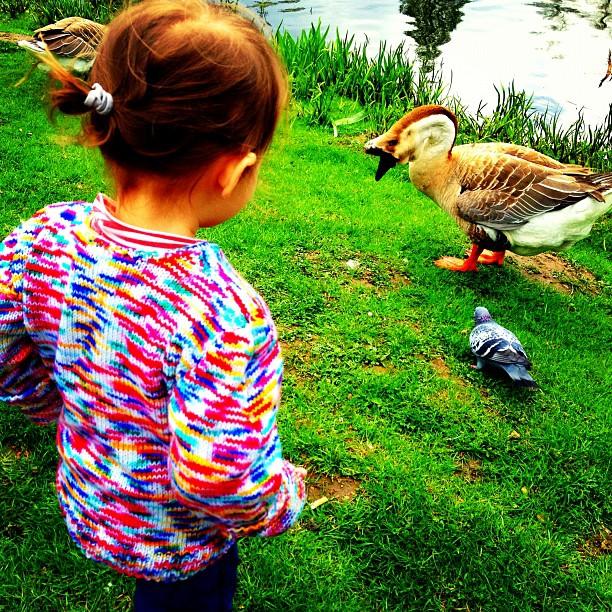 Emily is feeding the ducks.