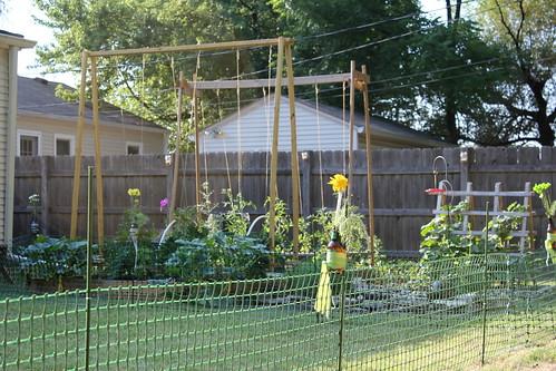 20120624. Post-housewarming, hot sun, late afternoon garden.