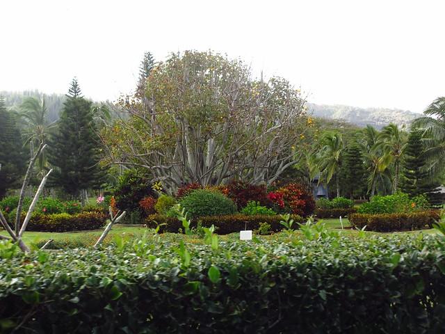 Luau grounds