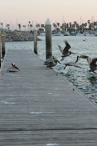 Pelican Flights