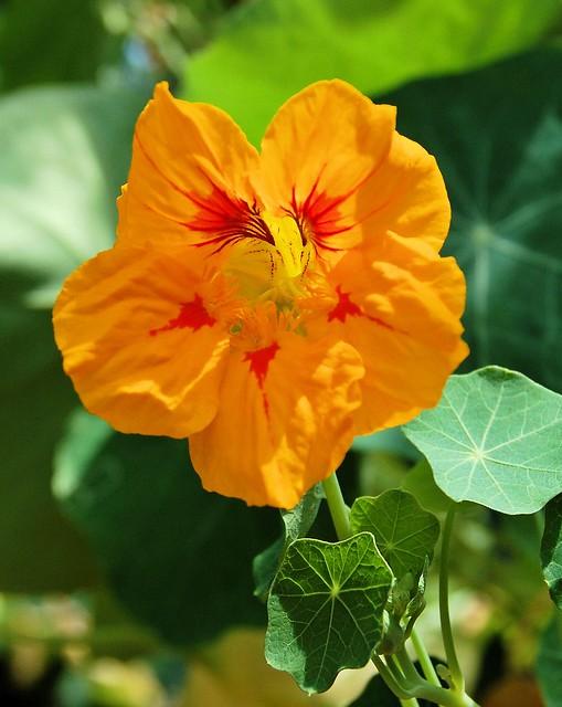 close up of orange trumpet bloom
