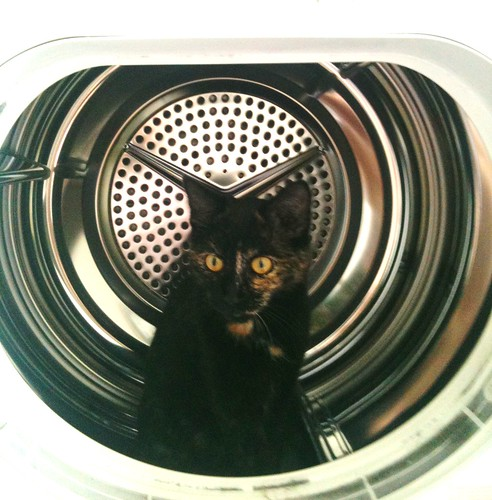 cat in washing-machine
