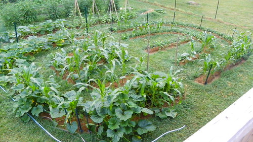 Squash, Cucumbers & 3 Different Plantings of Corn
