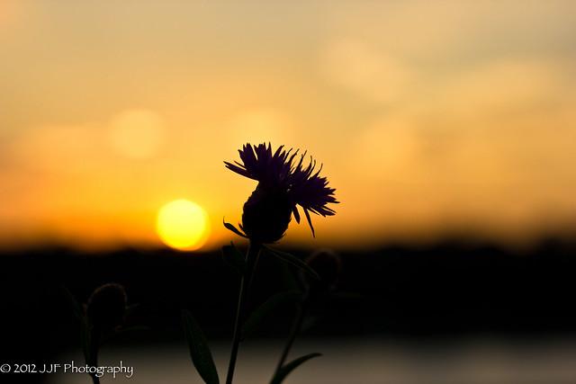 2012_Jul_05_Harkness Park Sunset_039