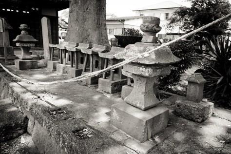 #75 The Giant Zelkova of Tomonuma Hachiman Shrine