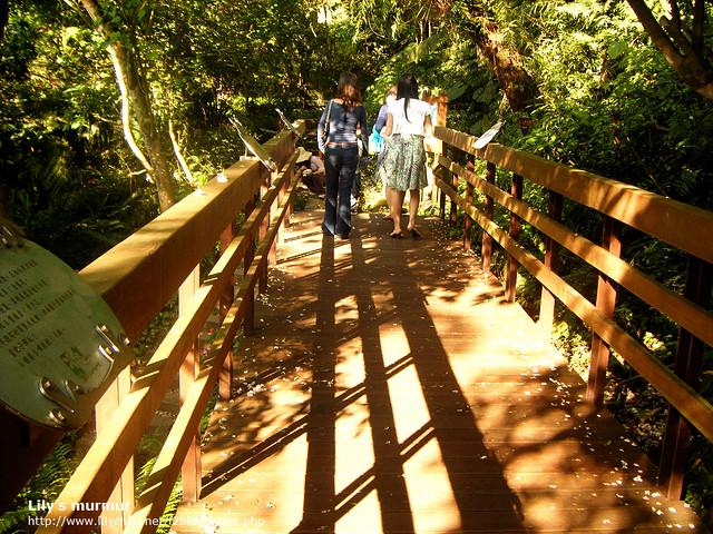 在步道內散步,三五好友一起走走,欣賞桐花及做個森林浴,真的很好。