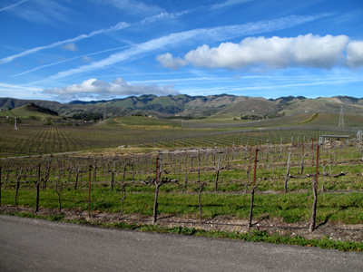 West Coast Winery Tour