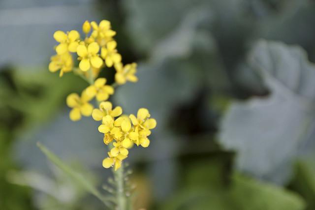 unknown vegetable bloom