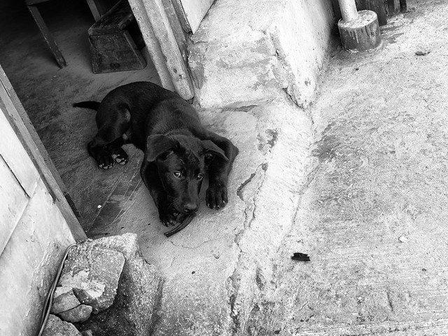 Dogs at the street 11