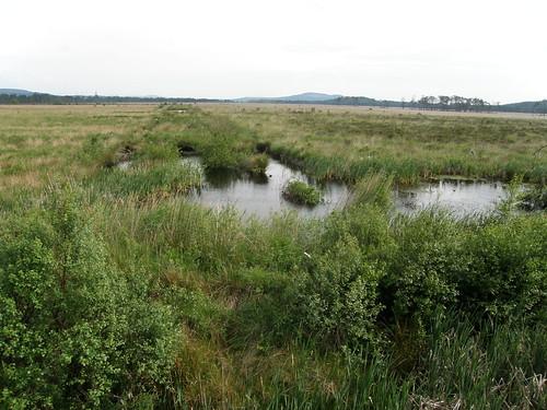 Foulshaw Moss