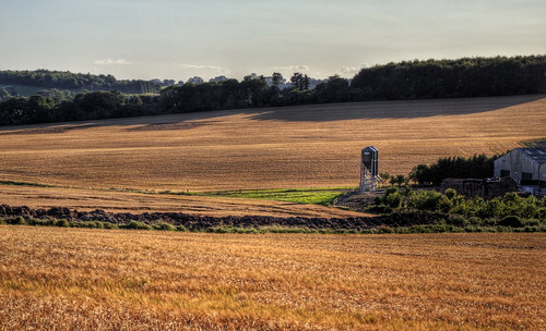 A rural landscape in Hampshire, near Winchester