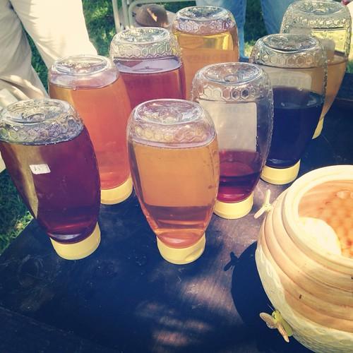 Honey tasting time