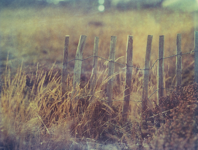 Polaroid photography inspiration by Ludwig West