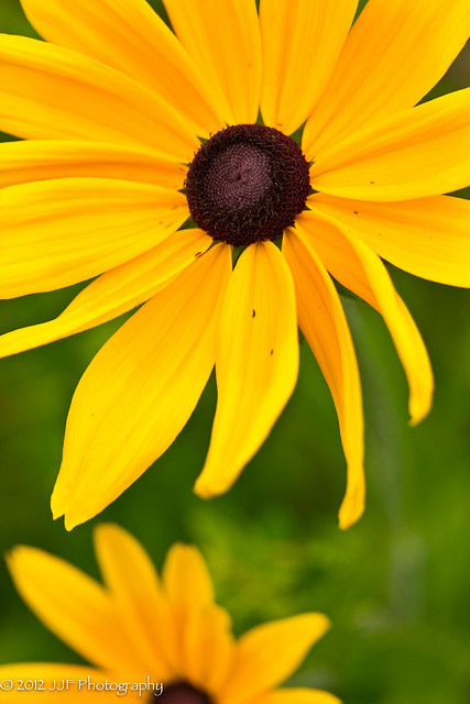2012_Jul_03_Yellow Flower_010