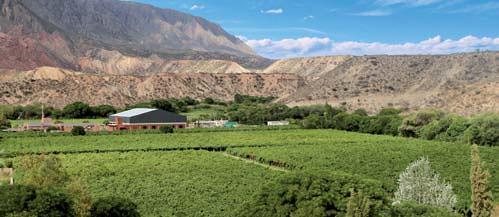 Se implantaron 25 hectáreas con nuevos ejemplares de varietal de nuez,
