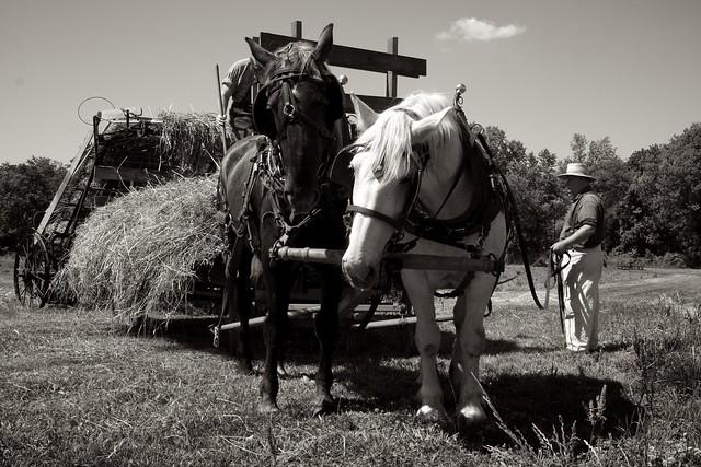 Making Hay 5