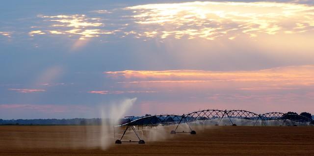 Morning Irrigation 2