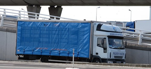 Iveco Pigeon Carrier (1)