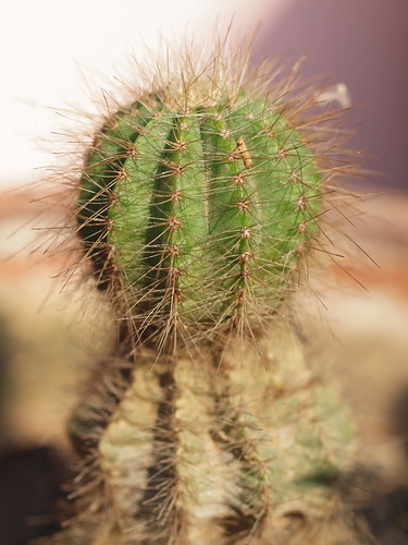 180/366 - Cactus by Flubie
