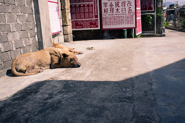 Dogs at the street 3