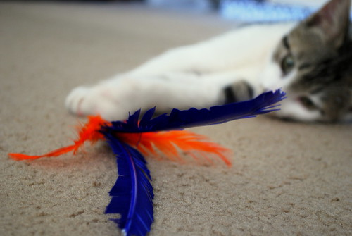 he can haz feathers.